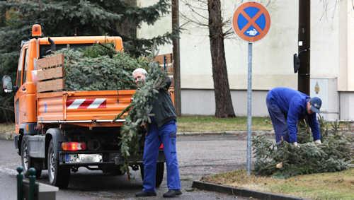 weihnachtsbaeume 2011
